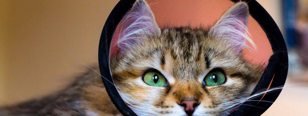 عقیم سازی حیوانات خانگی: چرا؟ چگونه و چه وقت؟