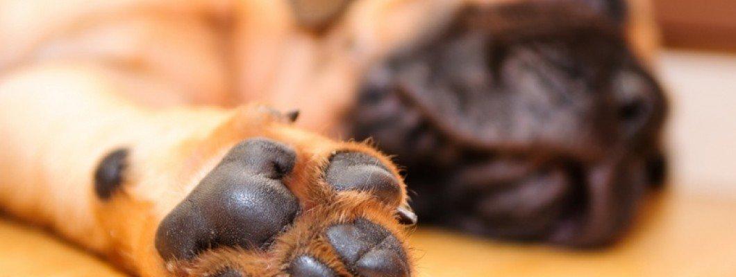 نکاتی جذاب دربارهی پنجه سگها