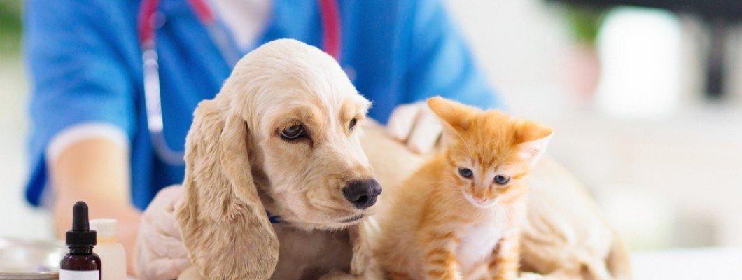دامپزشکان و حیوانات خانگی