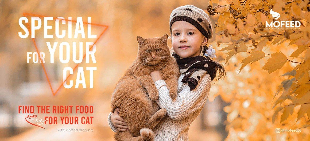 خوراک گربه مفید