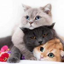 خوراک گربه